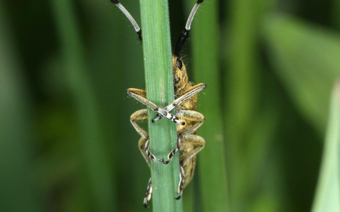 """Bildvortrag """"Das Sterben der Insekten – warum Insekten so wichtig sind"""""""