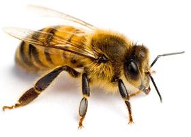 Foto Welt der Bienen